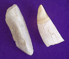 Whale jawbone and tooth